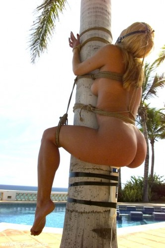 palm tree bondage