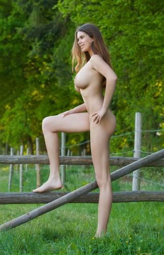 fence step