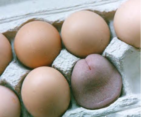 eggs.jpg (20 KB)